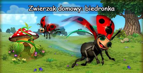biedronka_news.png